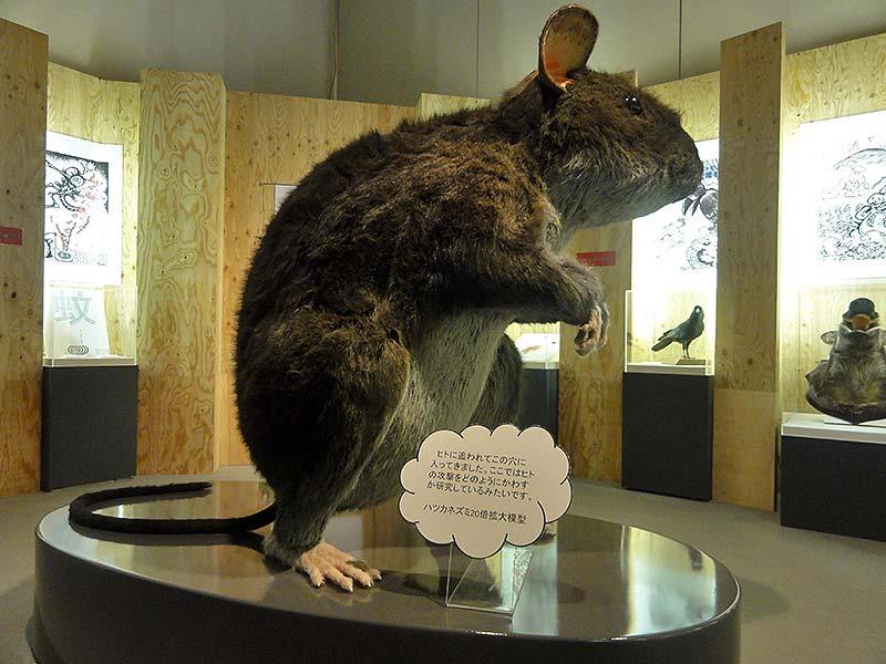 ハツカネズミの拡大展示模型