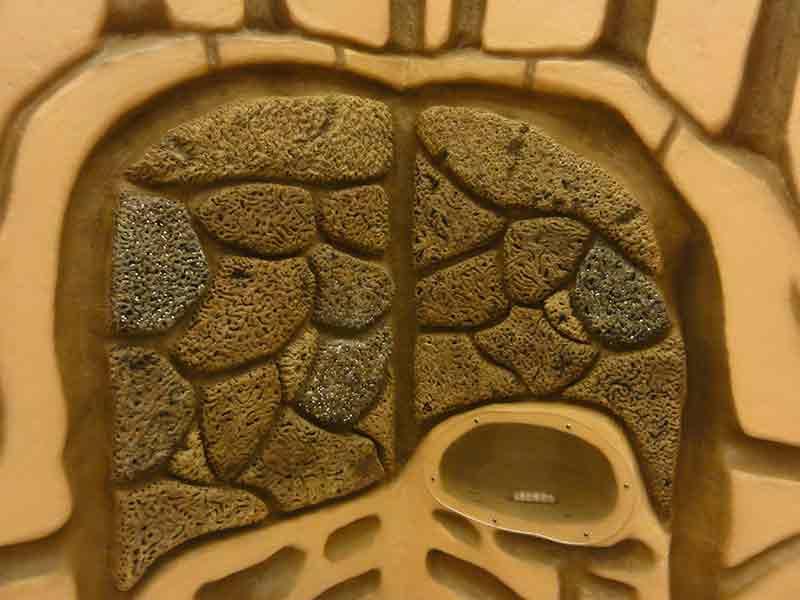 国立科学博物館のアリ塚の模型3