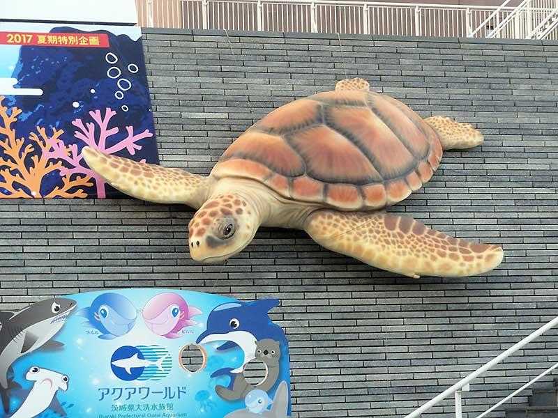 アカウミガメの企画展用看板2