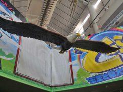 ハクトウワシの造形看板2