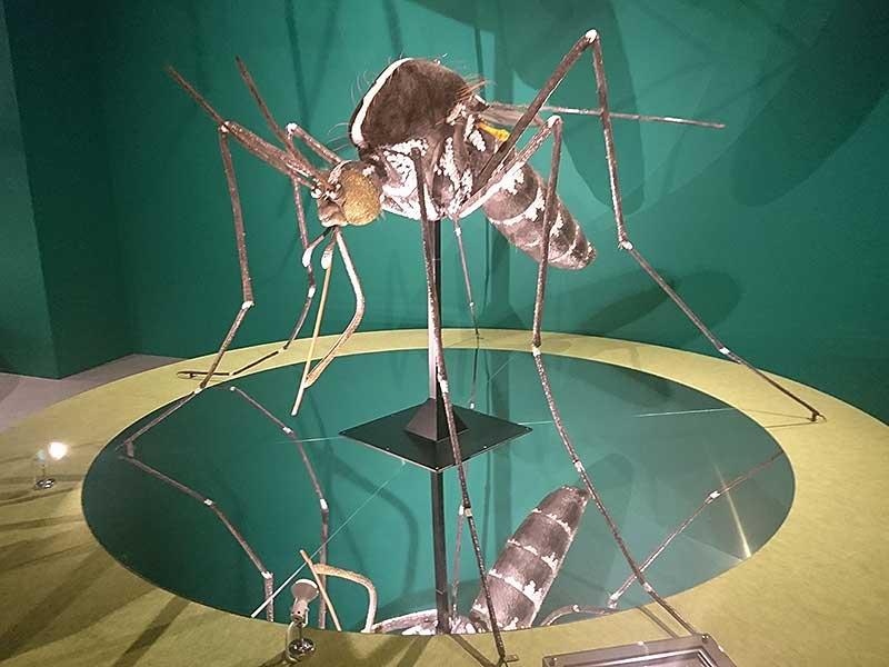 国立科学博物館の巨大なヒトスジシマカの模型1