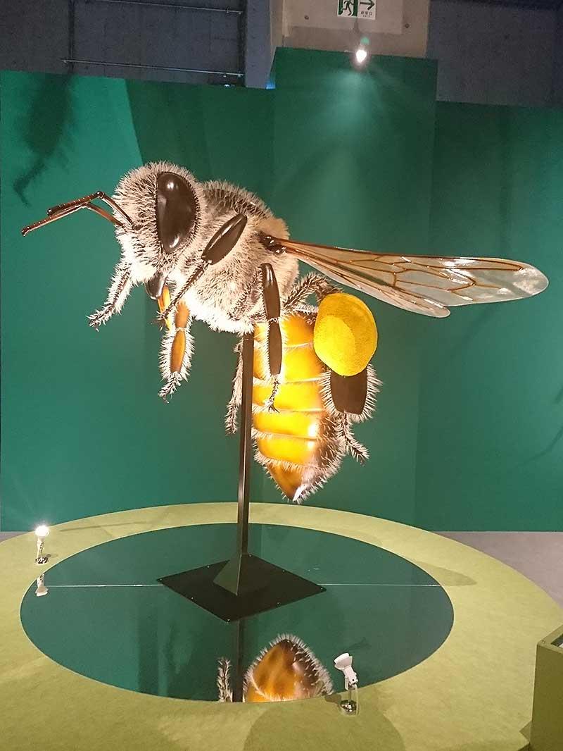 国立科学博物館の巨大な二ホンミツバチの模型1