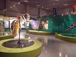 国立科学博物館の巨大昆虫模型1