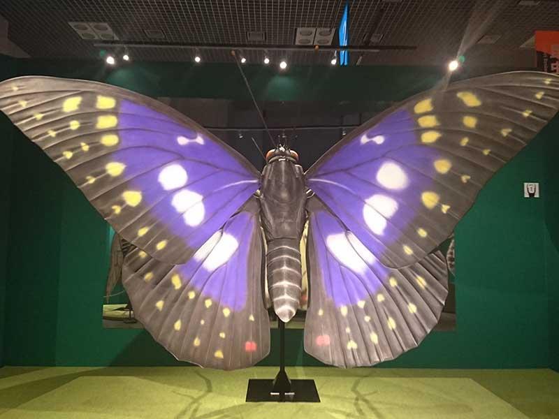 国立科学博物館の巨大なオオムラサキの模型1