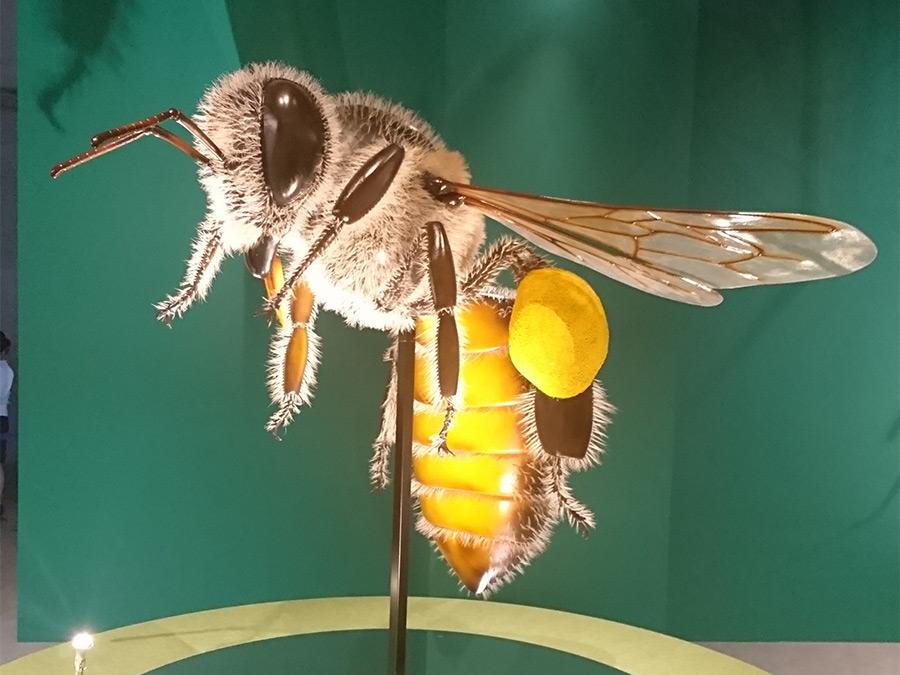 国立科学博物館の特別展「昆虫」の日本ミツバチの巨大昆虫模型