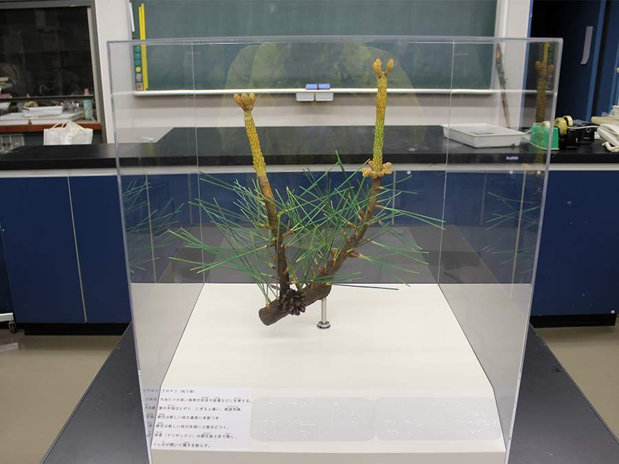 体験用植物展示拡大模型