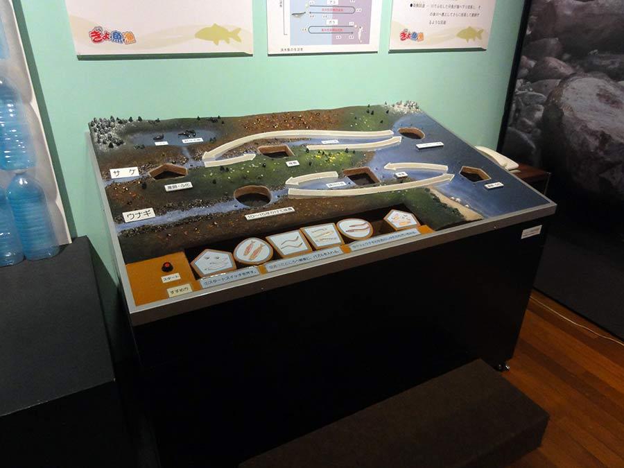 うなぎと鮭の回遊解説展示パズル