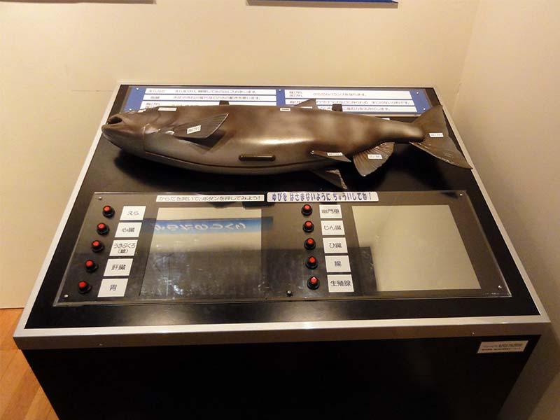 鮭の展示模型2