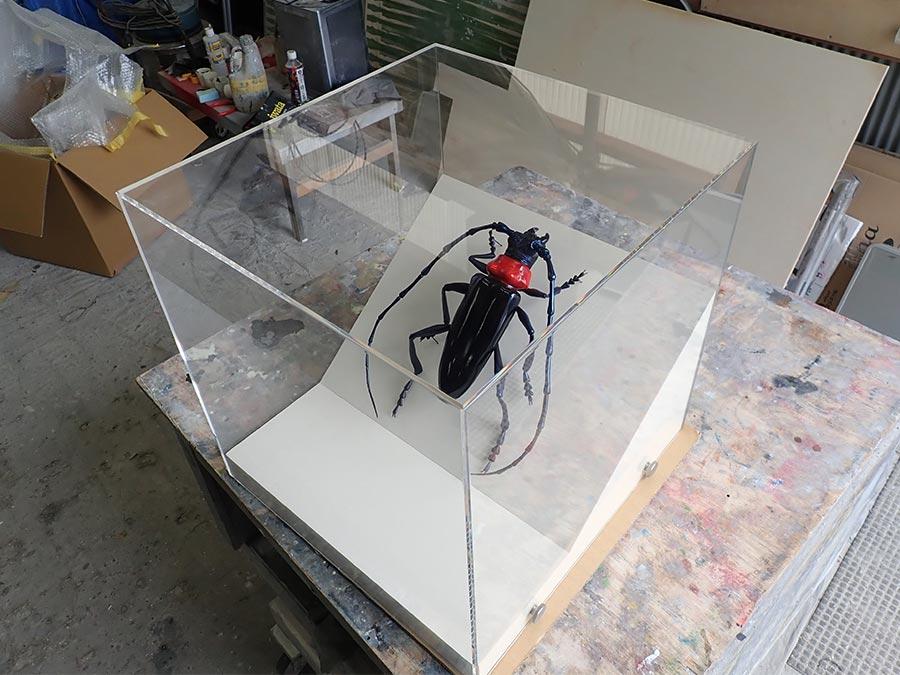 クビアカツヤカミキリの昆虫模型