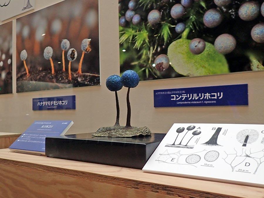 変形菌(ルリホコリ)の拡大模型