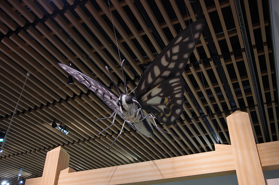 ミカドアゲハの巨大模型