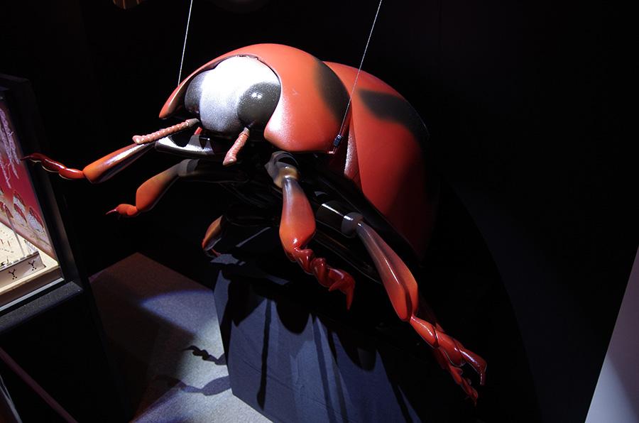べダリアテントウの巨大模型